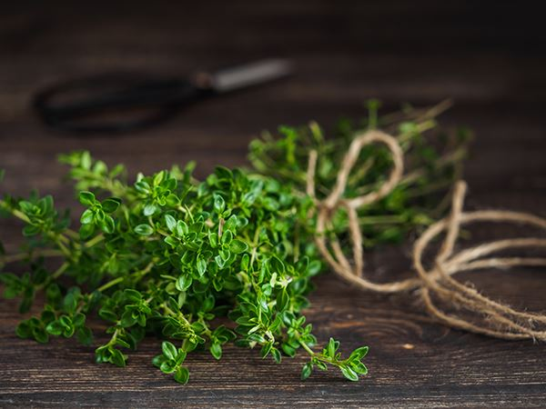 Fresh Thyme wrapped in twine with scissors in the background on a wooden surface